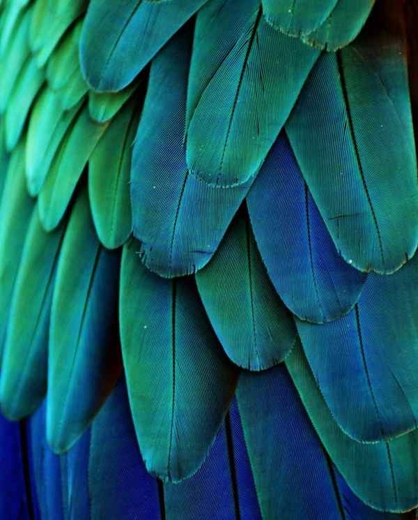 bird, feathers