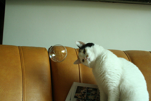 http://24.media.tumblr.com/tumblr_m5u9djrXjj1qzzfgmo1_500.jpg #bubble #photo #look #cat