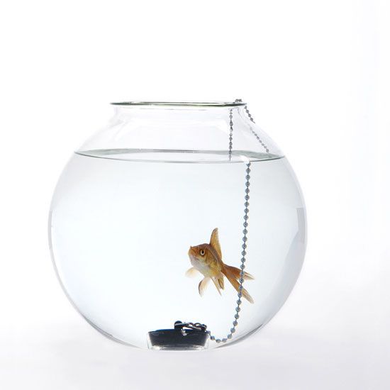 Do not piss me off: Fish Bowls by Roger Arquer #design #bowl #fish