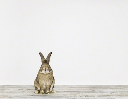 Bunny No. 1 - Sharon Montrose - Animal Photos - Wildlife Photography - Limited Edition Prints - Nursery Decor -Wall Decor -Gift Ideas - Uniq #photography #bunny
