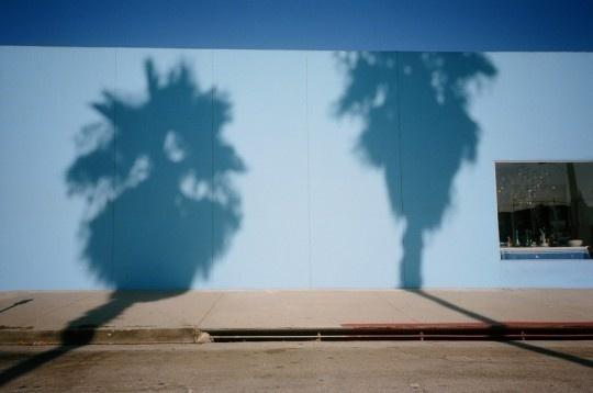 Photo by Darren Ankenman #palm #photography #wall #darren #usa #ankenman #trees