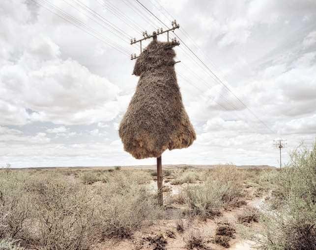 Assimilation by Dillon Marsh #inspiration #photography #landscape