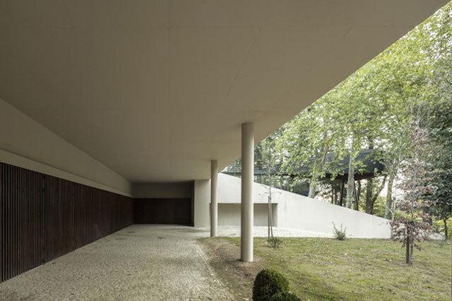 treesnakehouse-9 #architecture #house #tree