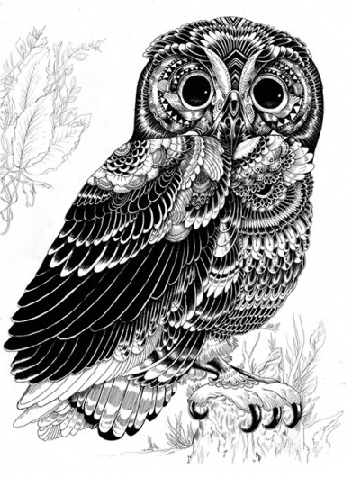 Incredibly Detailed Animal Illustrations - My Modern Metropolis #owl #illustrations