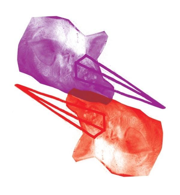 hroink lies #red #pattern #kostis #illustration #photography #pigs #purple #sotirakos