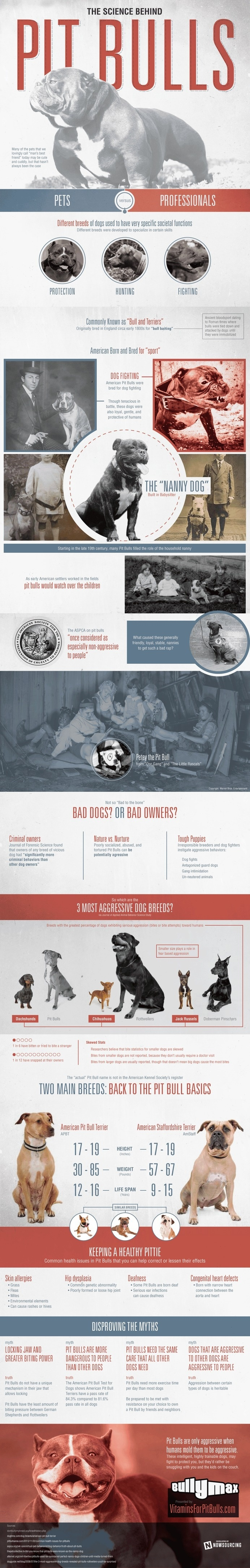 Pit bulls have a bad reputation, but it has not been earned by the dogs alone.Learn more about the science of pit bulls from this infograp # #aggressive #breed #bully #pit #dangerous