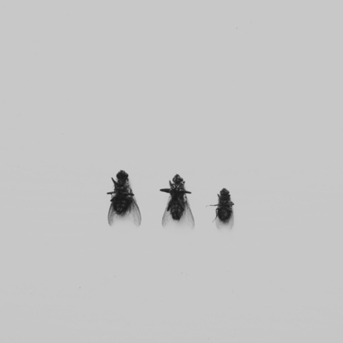 Jonas Eriksson » Every Reason to Panic #photography #flies #minimalism