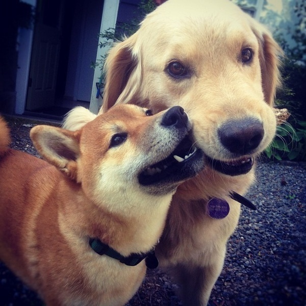 Learning how to share. #cute #dogs