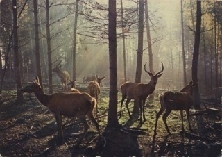 Piccsy :: Recent posts #sun #photography #deer