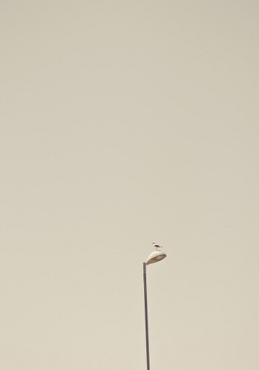 The Momentary | The photography of Murray Mitchell #cape #photography #town #seagul