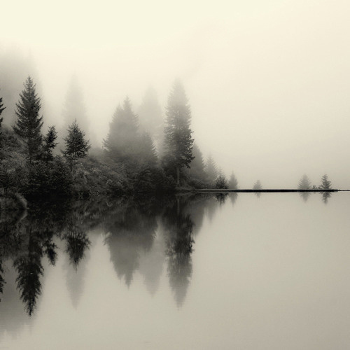 love.beauty #fog #photo #nature #lake #forest #trees