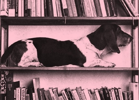 Holiday « Eight:48 #dog
