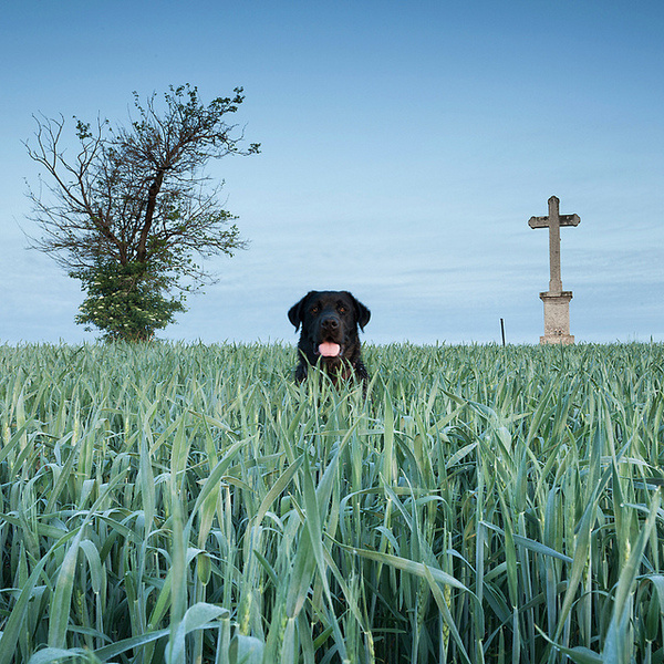 by aba t. #cemetery #tree #dog