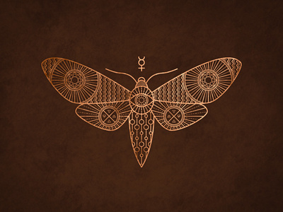 Moth #moth #animal #drawing #illustration