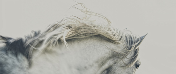 MAJESTIC on Behance #horse #white #mane #photography #art #animal #beauty