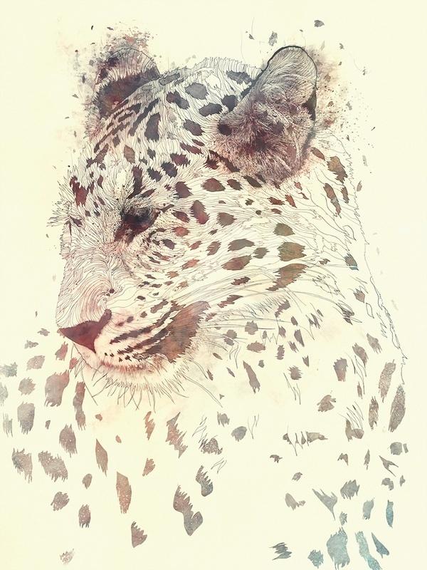 Antoine Duchamp Photography X Sahir Khan Illustration #illustration #tiger