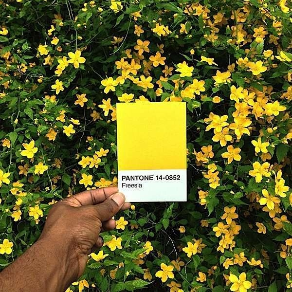 Pantone Project on Instagram #photo #series