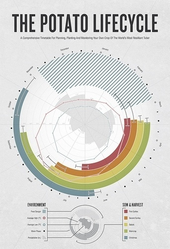 The Fascinating World of (Good) Infographics | eagereyes #lifecycle #infographics #potato #poster