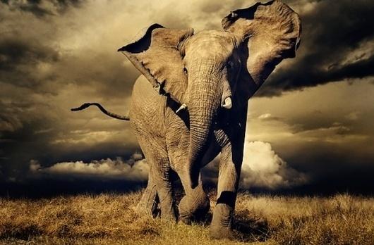 Spectacular Shortlist: Sony's World Photography Awards (15 photos) - My Modern Metropolis #elefant #photography #animal