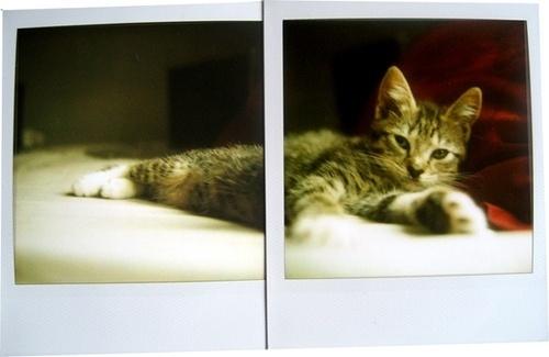 nermal | Flickr - Photo Sharing! #photo #collaboration #polaroid