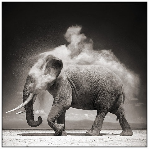 FFFFOUND! | 9 Elephant With Exploding Dust (JPEG Image, 884x884 pixels) - Scaled (70%) #elephant
