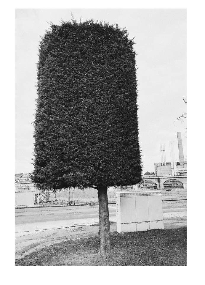 #urban #tree PHOTOGRAPHIE © [ catrin mackowski ]