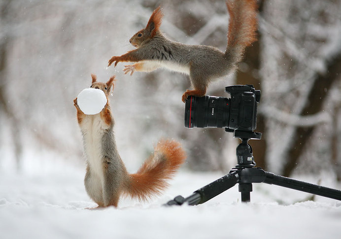 Adorable Squirrel Poses Photography by Vadim Trunov #animal photography #cutest poses