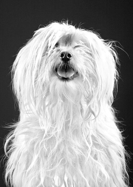 Design Work Life » cataloging inspiration daily #dog