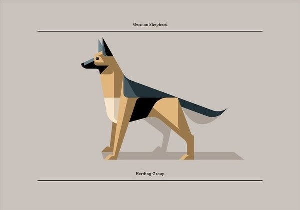 German Shepherd Print by Josh Brill