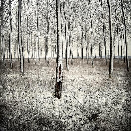 Woods #woods #snow #photography #minimal #trees