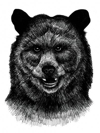 Kristina Krogh Larsen #bear #ink #drawing