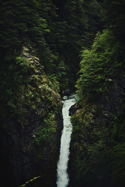 photo #water #rich #nature #photography #waterfall #dark #trees #green