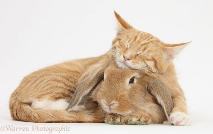 Mark Taylor Captures Hilarious Photos Of Pets Sharing The Same Colors