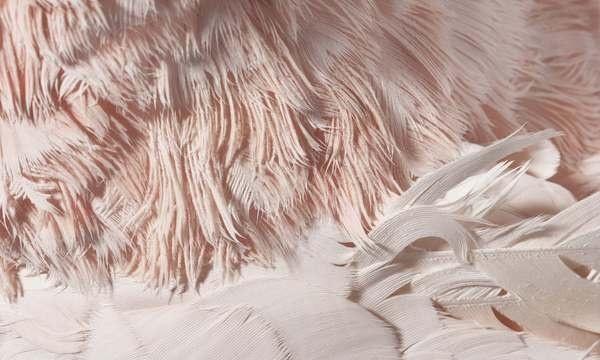 Birds   The Bird Book #pink #photo #feathers #bird #zoom