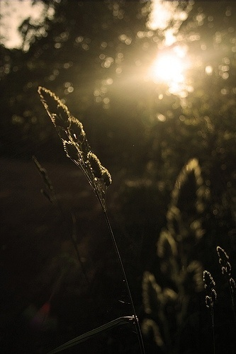 Image Spark - Image tagged #photography #flare