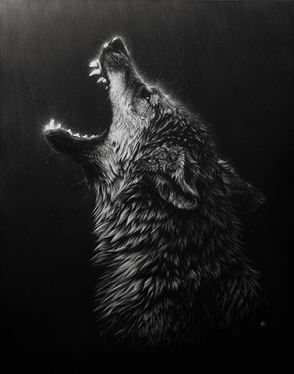 tumblr_l5s8polCim1qao4gno1_500.jpg (500×634) #wolf