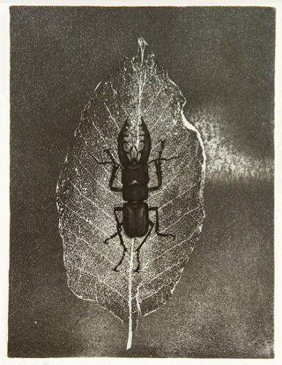 9+ye+hoe+1970.png (448×578) #bug