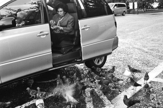 bird lady #hydepark #van #old #lady #feeding #birds