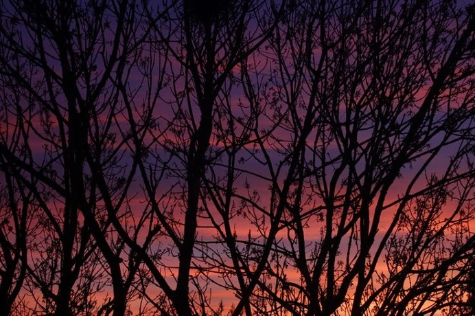 #tree #purple #sunset #siluet #photo