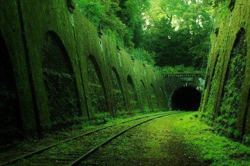 Posted Image #photo #place #tunnel #tracks #abandoned #nature #green