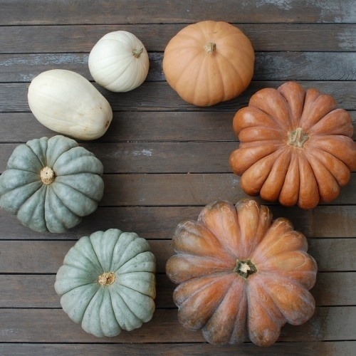 DSC_1320 #interior #pumpkin #design #deco #decoration