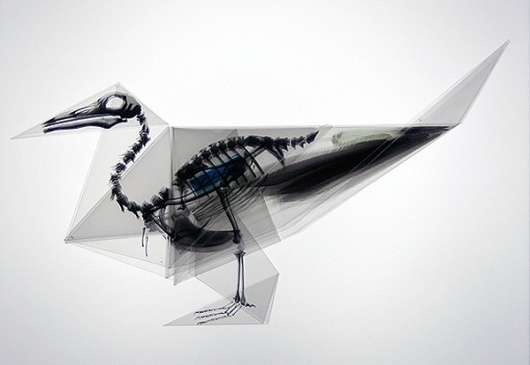 Oritsunagumono by Takayuki Hori | Colossal #skeleton #origami #bird
