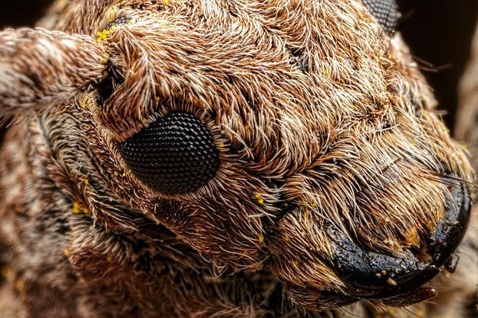 Incredible close-up Macro Photography of Insects by Dalentech #macro photography #insects photography #animal photography
