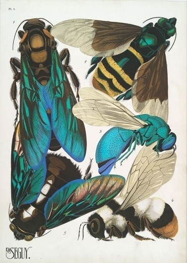 weetstraw.com - Insect Collages #insects #illustration #poster