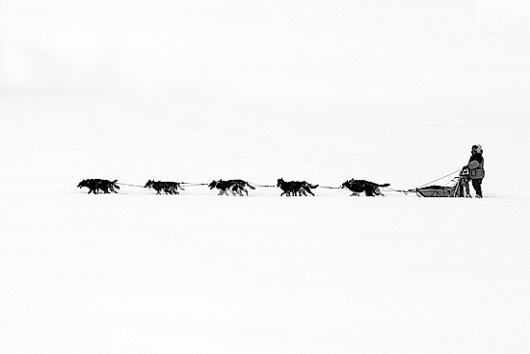 Black & White Snow Wonderland 2 | Abduzeedo | Graphic Design Inspiration and Photoshop Tutorials #snow #dog
