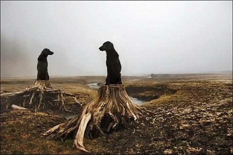 FFFFOUND! | Flickr Photo Download: meadow thrones #dog #landscape