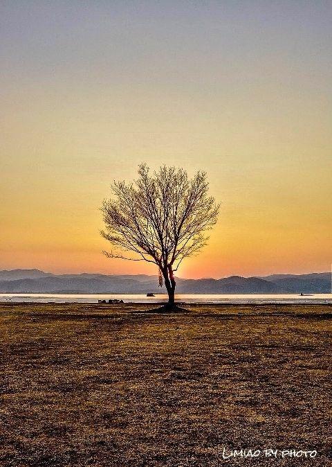 #PicsArt#Nature#Tree#sunset#