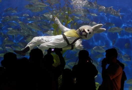 Chinese New Year, 2011 - The Big Picture - Boston.com #photo #water #weird #diver