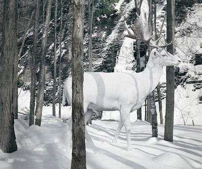 Baubauhaus. #dear #white #snow #albin #forest #winter