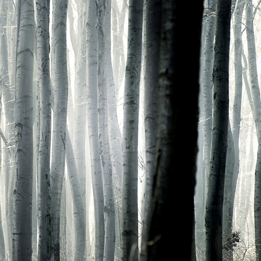 a forest on the Behance Network #major #photography #akos #trees